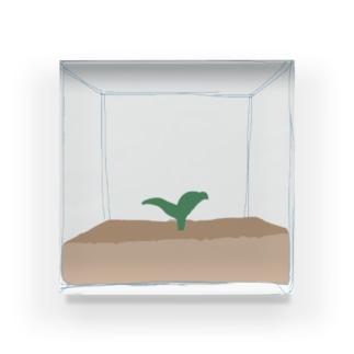 とじこめる しょくぶつ Acrylic Block