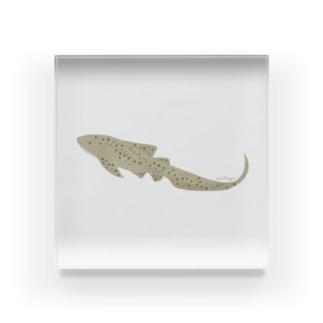 ひょっこりトラフザメさん Acrylic Block