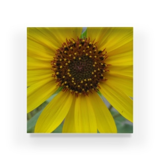 太陽とお友達!! Acrylic Block