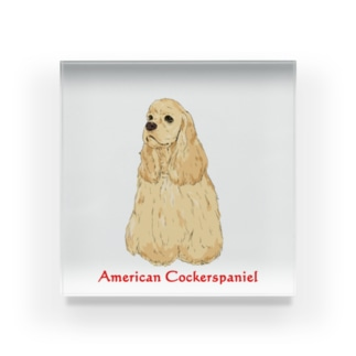 American Cockerspaniel Buff Acrylic Block