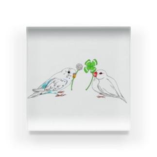 セキセイインコと文鳥とクローバー フルカラー① Acrylic Block