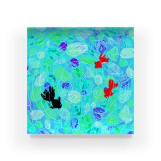 金魚すくい🐟 Acrylic Block