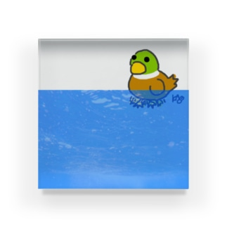 水面下で頑張るカモ【改】 Acrylic Block