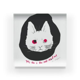 odd-eyed cat Acrylic Block