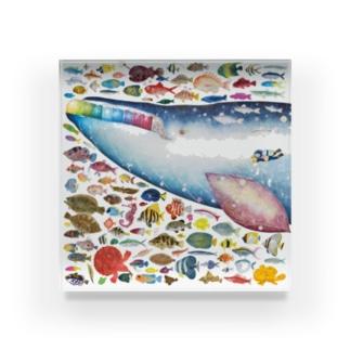 お魚いっぱい、シロナガスクジラと泳ぐ Acrylic Block