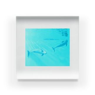 遊泳🐬 Acrylic Block
