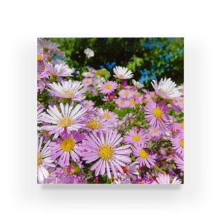 Pink flowers  Acrylic Block
