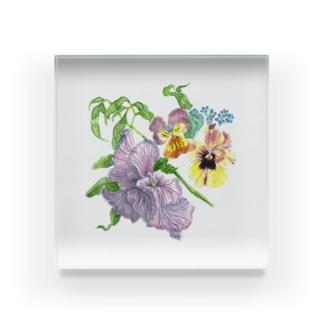 ヴィオラ、パンジー、勿忘草 Acrylic Block