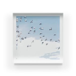 早帰りの鳥たち Acrylic Block
