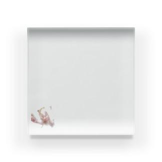 ベビーシロポンシリーズ Acrylic Block