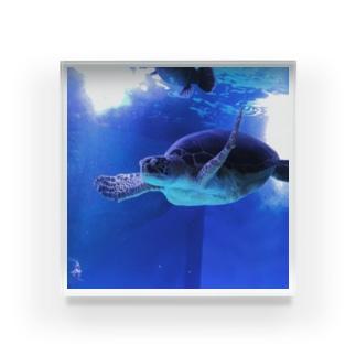 海亀 Acrylic Block