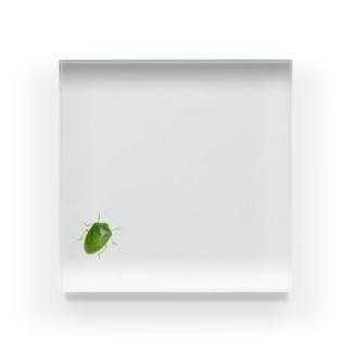 カメカメザグリーン Acrylic Block