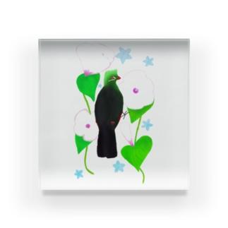 見返り美鳥(ギニアエボシドリ)と花① Acrylic Block