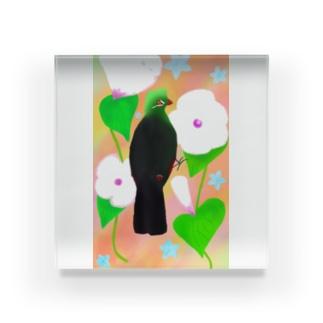 見返り美鳥(ギニアエボシドリ)カラフル背景① Acrylic Block