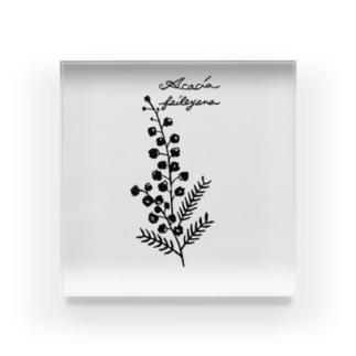 植物図鑑シリーズ…ミモザ Acrylic Block