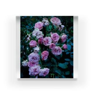 濡れた薔薇 Acrylic Block