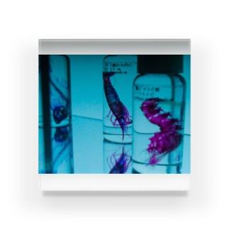 透明標本たち Acrylic Block