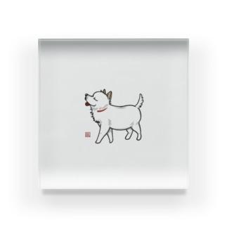 White dog. Acrylic Block