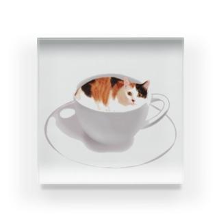 猫カフェラテ☕️おいしそうな いろをした ねこ. Acrylic Block