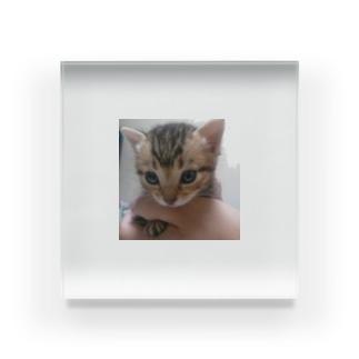 子猫 Acrylic Block