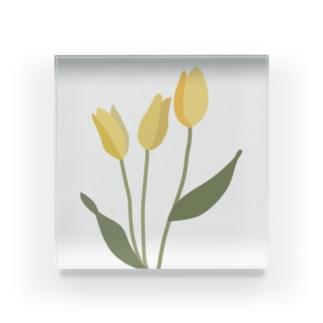 yellow tulip Acrylic Block