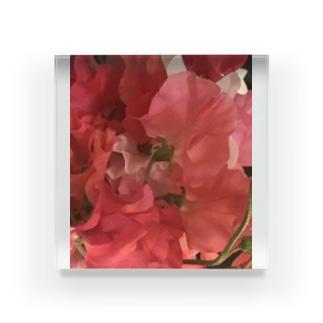 赤いスイートピー Acrylic Block