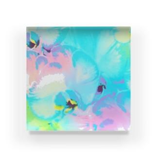 幸福が飛んでくる!イランの胡蝶蘭♡レインボー Acrylic Block
