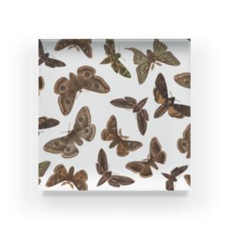 英国の蛾 Acrylic Block