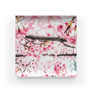 Pudding/アライマリンのしずくの世界 桜 Acrylic Block