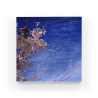 桜 サクラ cherry blossom DATA_P_093 Acrylic Block