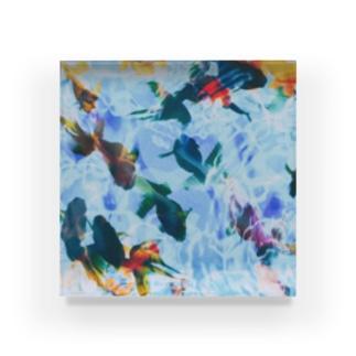2641の金魚たち Acrylic Block