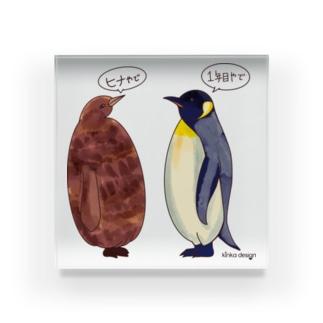 オウサマペンギンのヒナと1年目 Acrylic Block