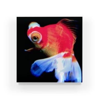 金魚姫 Acrylic Block