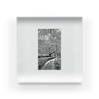 桜の街路樹 Acrylic Block