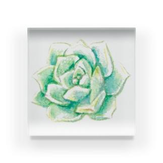 白牡丹 水彩色鉛筆 Acrylic Block