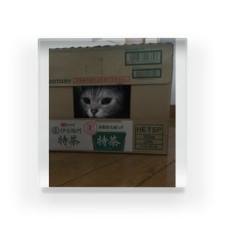 大道芸人Ino(いの)の大道芸人Inoのペット Acrylic Block