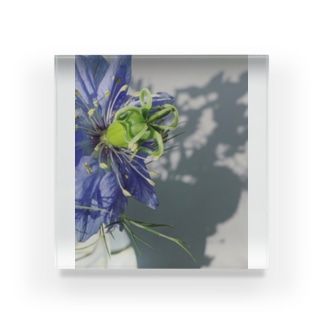 blue nigella Acrylic Block