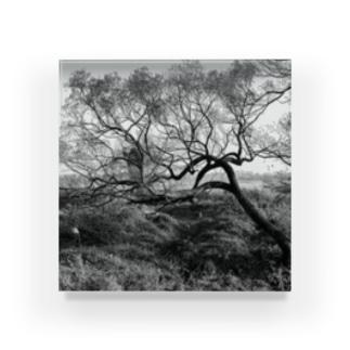tree Acrylic Block