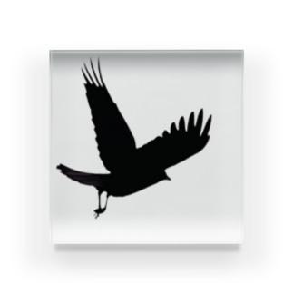 飛翔カラス。 Acrylic Block