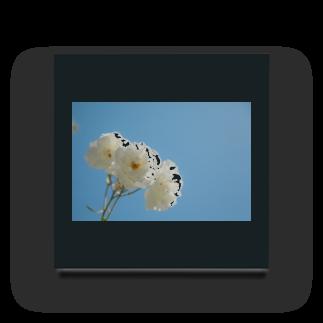 BLACKANDWHITEのwhite rose Acrylic Block