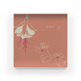 ととめめ/ totomemeのととめめ明日のお花:5月17日 Acrylic Block