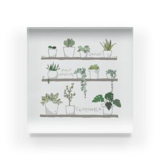植物さんたち Acrylic Block