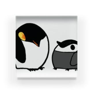 まんまるペンギン Acrylic Block