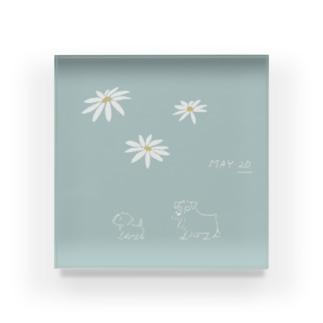 ととめめ明日のお花:5月20日 Acrylic Block