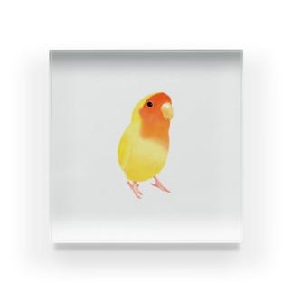 コザクラインコ おすましルチノー【まめるりはことり】 Acrylic Block
