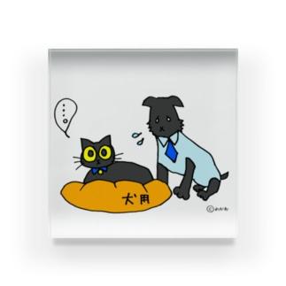 猫にベッドを取られる犬 Acrylic Block