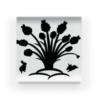 白黒木兎f Acrylic Block