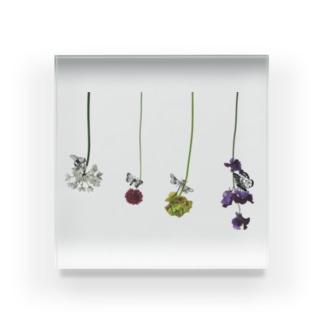 花と虫 Acrylic Block