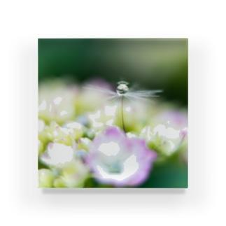 angel of hydrangea 170603 Acrylic Block