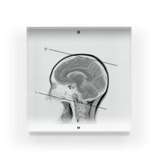 脳、改! Acrylic Block